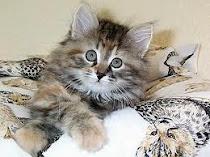 <<----Katzes---->> <<--- Bericht--->> <<--Schreiben-->>