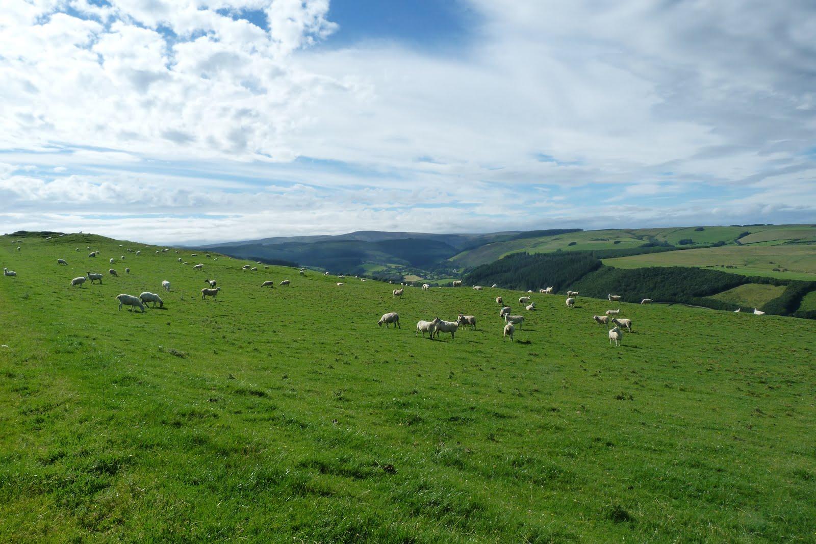 Pays de Galles (Wales)