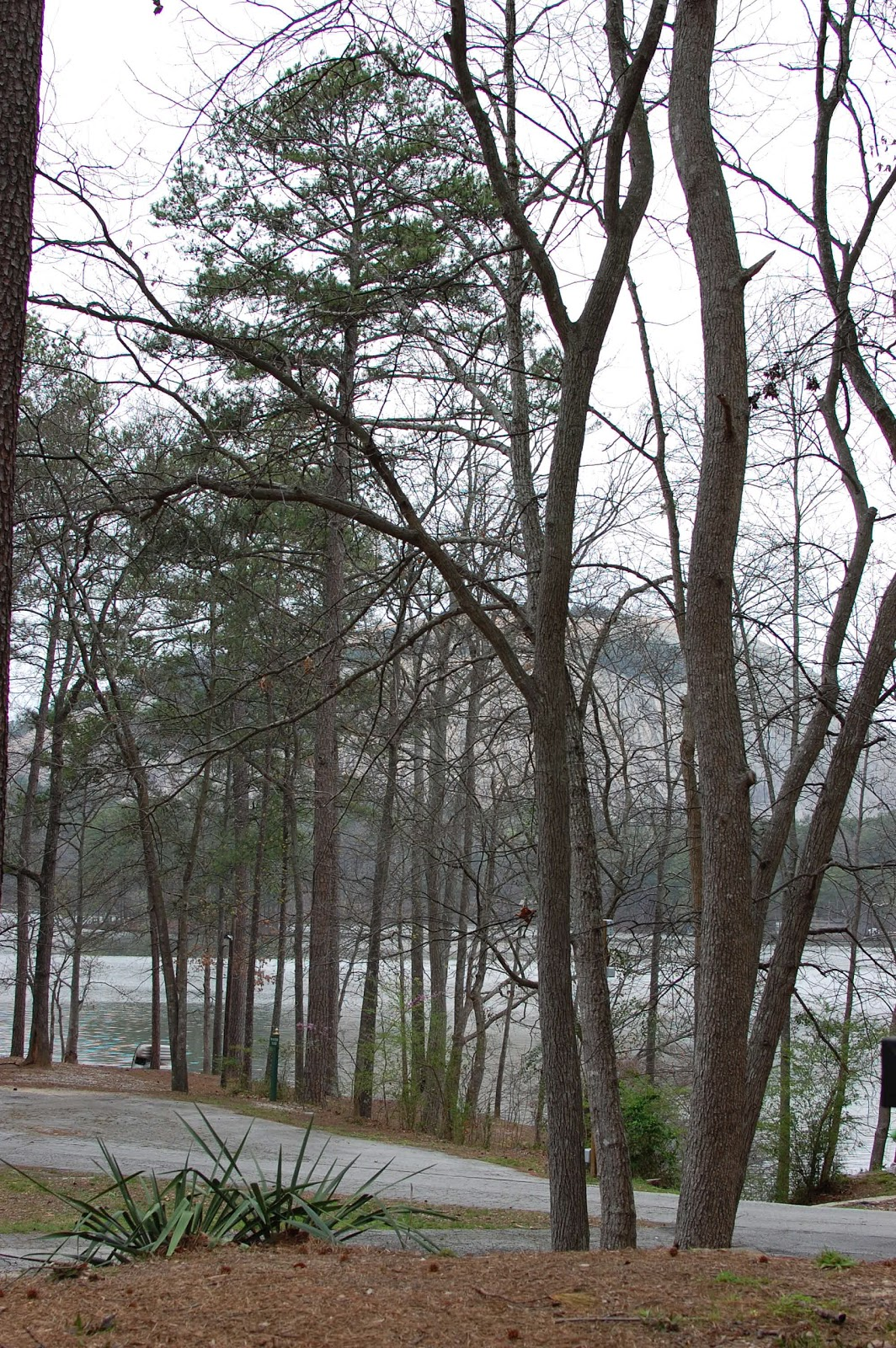 Stone Mountain as seen from my c& chair & Shanna\u0027s Adventures: Campsite Selection at Stone Mountain Park ...