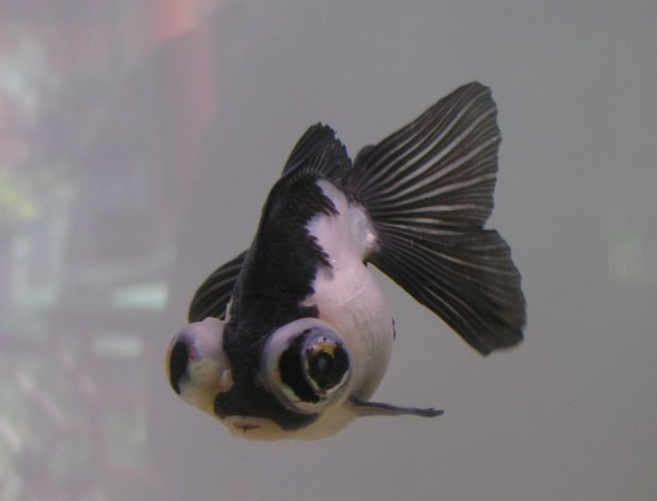 Goldfish Fun