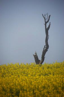 La foto de l'àlex