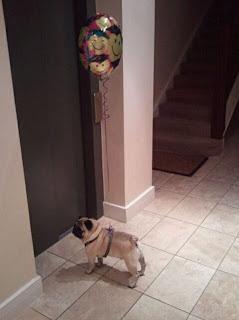 Mops mit Geburtstags-Lutballon