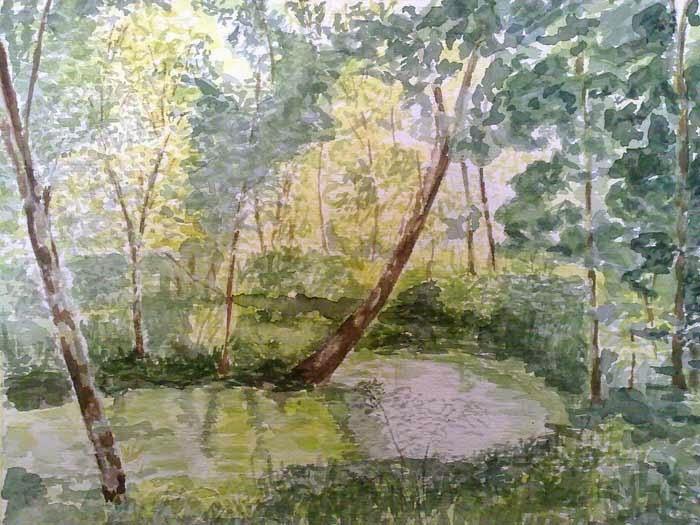 arboles rio vegetacion luz