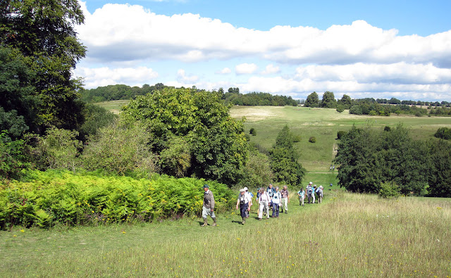 The OFC walking over rolling hills.  Orpington Field Club visit to Lullingstone Country Park.  13 August 2011.
