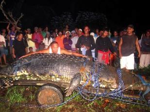 Hombre se mide con el cocodrilo amarrado