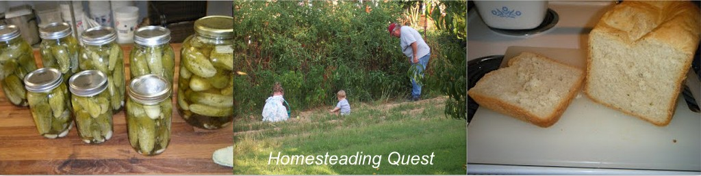 Homesteading Quest