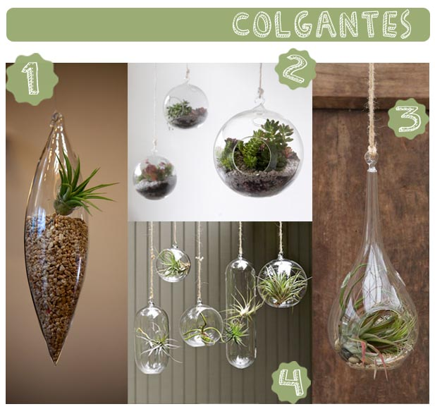 hanging_terrariums_terrarios_colgantes