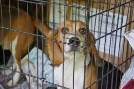 confinamento em cães
