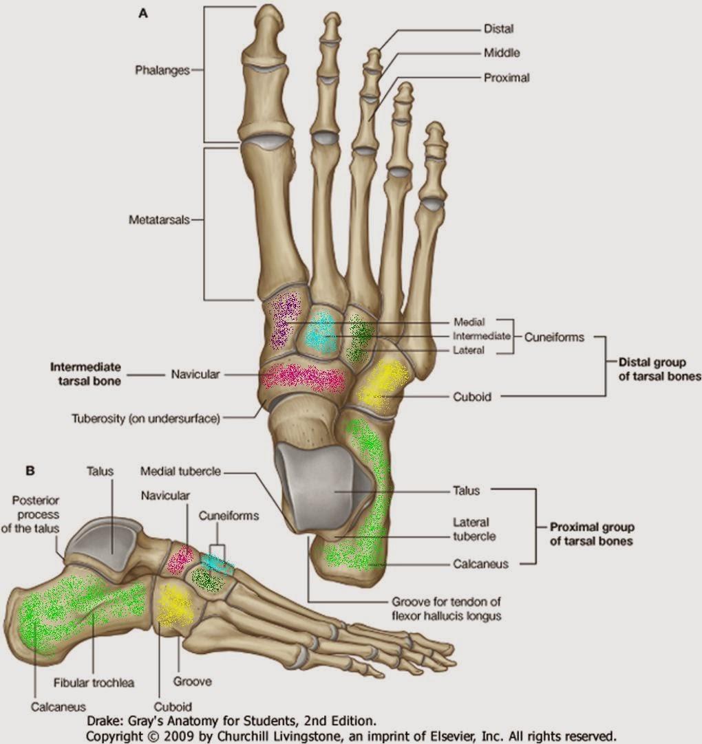 Trabajo de evaluación de Anatomia Artistíca: Proyecto de Evaluación ...