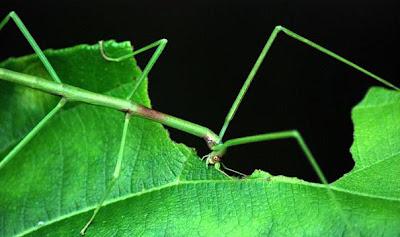 غرائب وعجائب الصور تخفي الحشرات