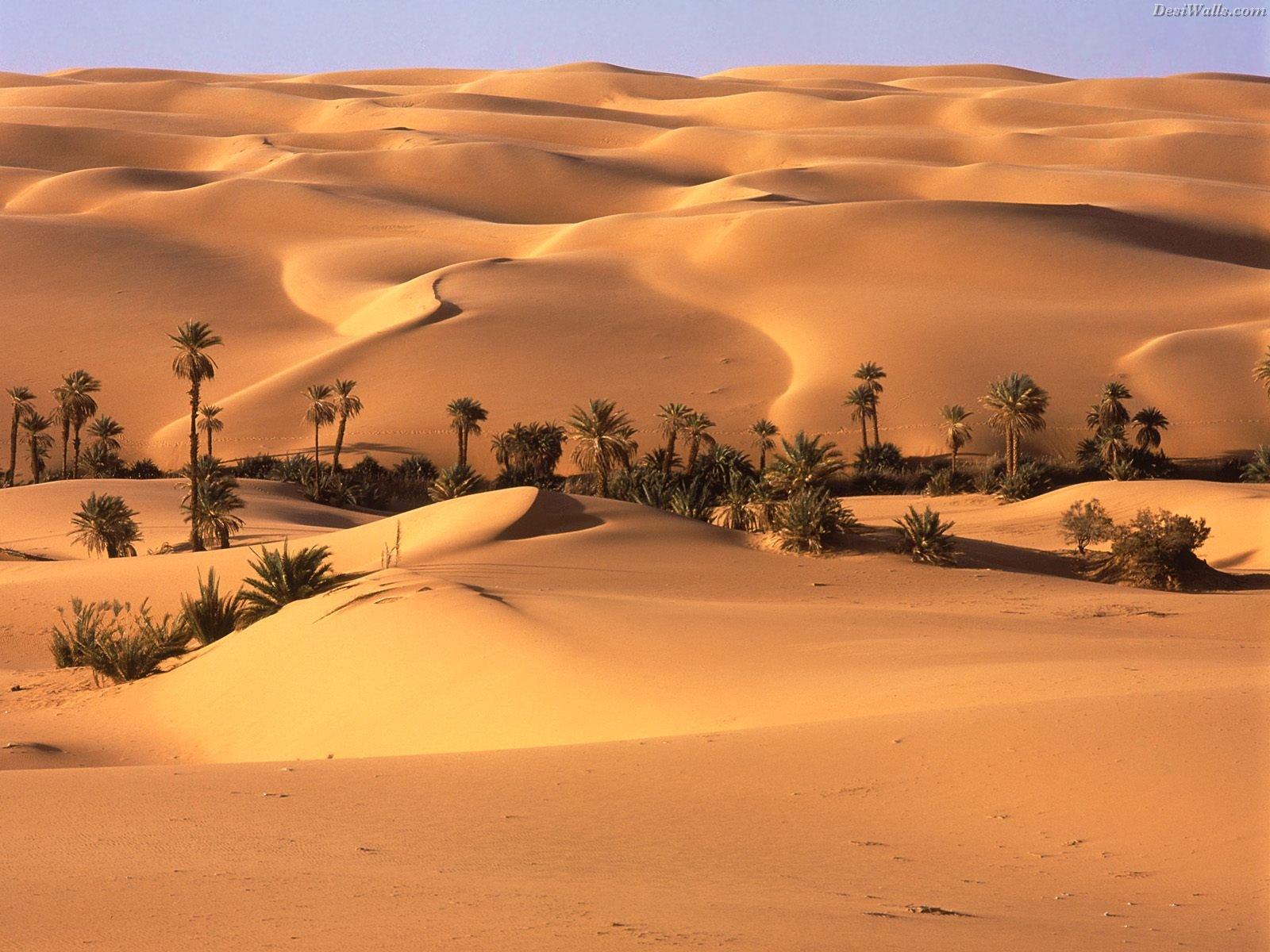 http://2.bp.blogspot.com/-4SfacX4NANw/TddvFowyDfI/AAAAAAAABHw/HKEvNAamjVE/s1600/sfondi-desktop-oasi-nel-deserto-immagini-pc-wallpapers.jpg