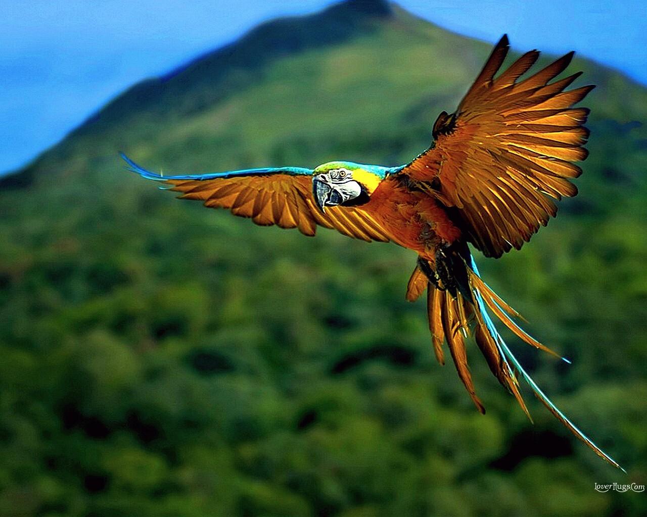 http://2.bp.blogspot.com/-4Sk9AHcCekY/T3TElkghO-I/AAAAAAAAG44/j_at6jLRfwA/s1600/Birds_9999530.jpg