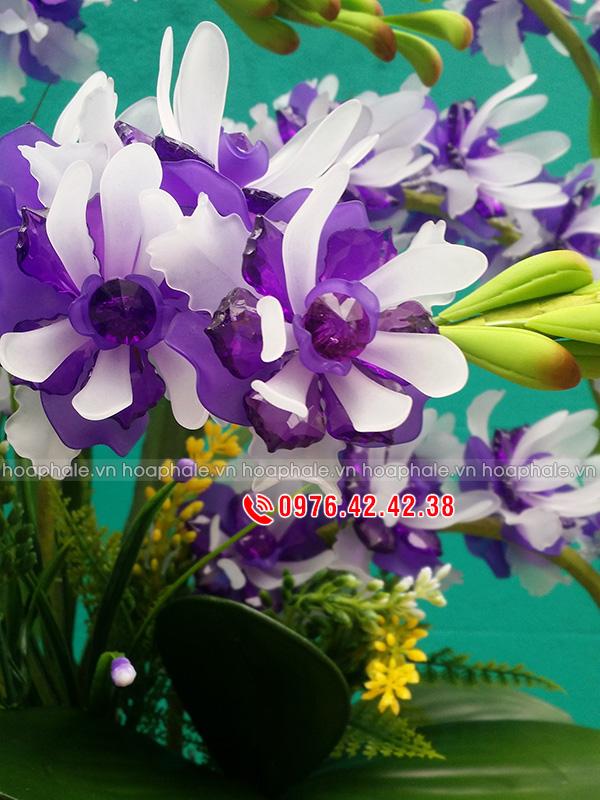 Mẫu hoa lan ngọc điểm tím trắng