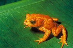 Başkalaşım geçiren hayvanlar evrim teorisi