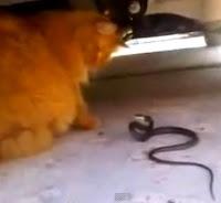 gato vs serpiente