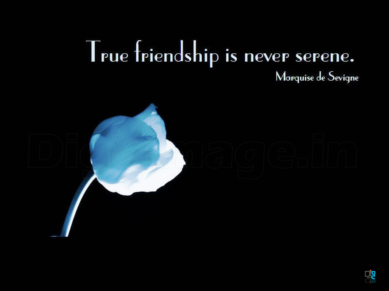 A Quote About Friendship 35 Friendship Wallpapers And Friendship Quotes