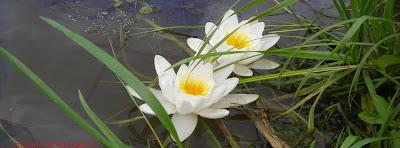 Couverture facebook belle fleur