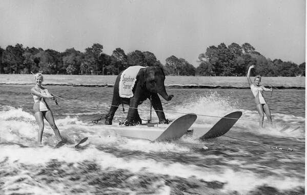 64 Historical Pictures you most likely haven't seen before. # 8 is a bit disturbing! - Queenie, the first ski elephant. 1950s