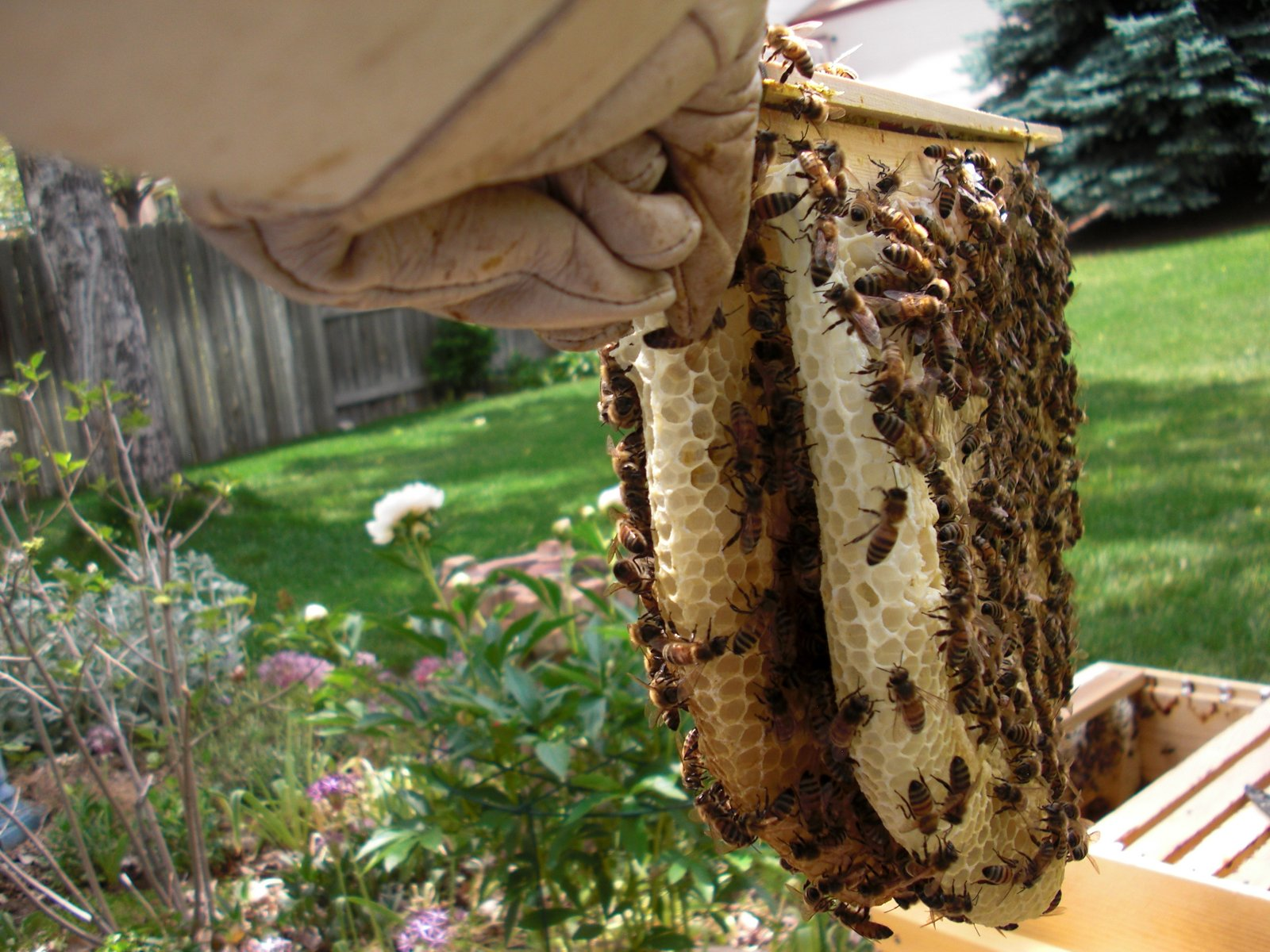 backyard bee hive blog may 2012