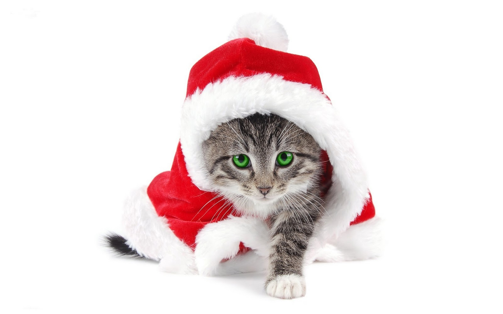 Cat In A Santa Hat Pictures