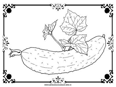 sketsa hitam putih gambar ketimun