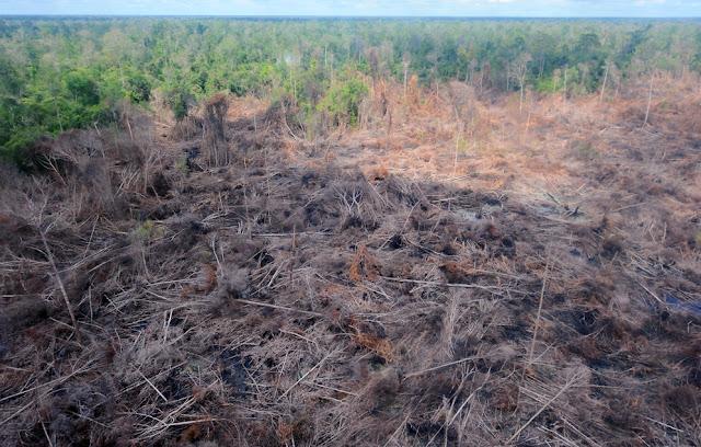 AS sumbang 40 juta dollar untuk pelestarian Hutan Kalimatan