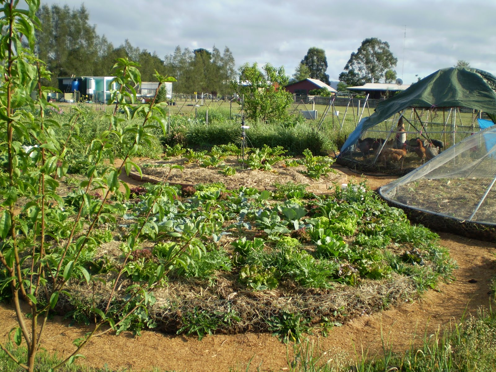 purple pear farm permaculture in action linda woodrow style