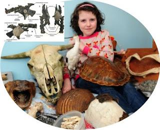 hasil penemuan-penemuan fosil nya