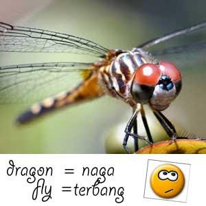 kinjeng, capung, dragonfly, naga terbang, serangga