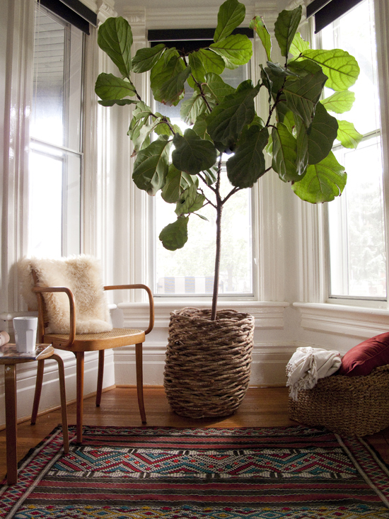 Lovely Home Inspo: Indoor Trees