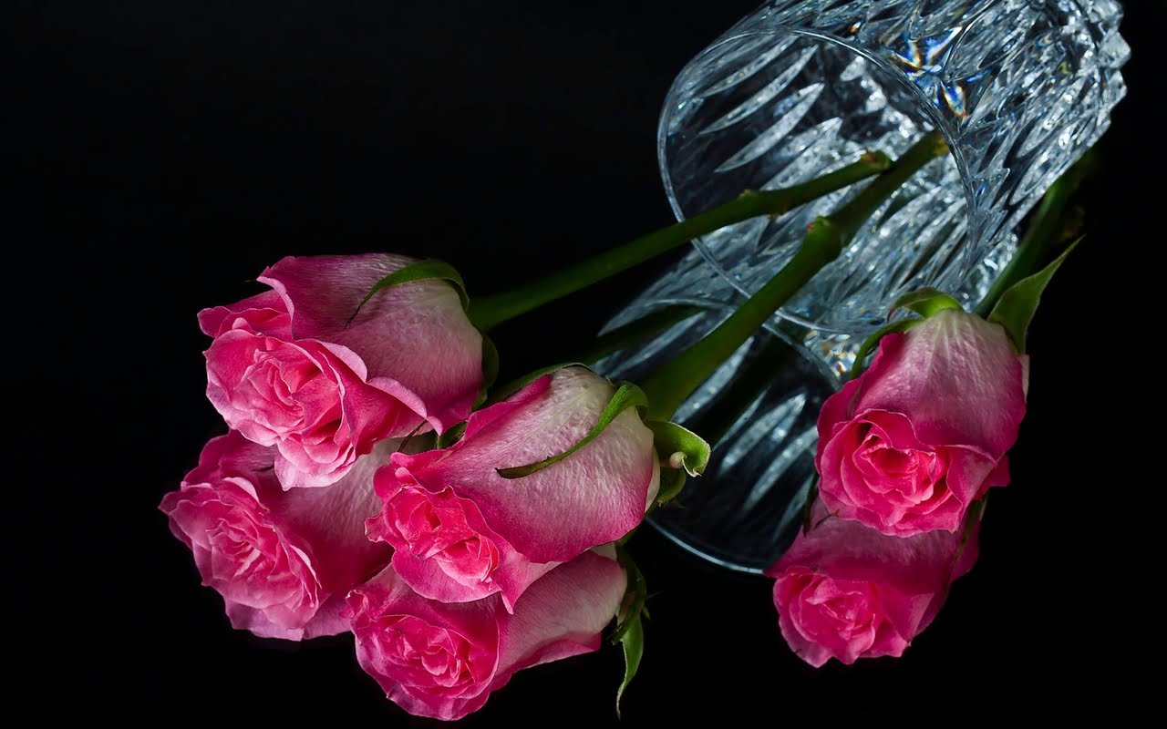 Pink Flower Black Background