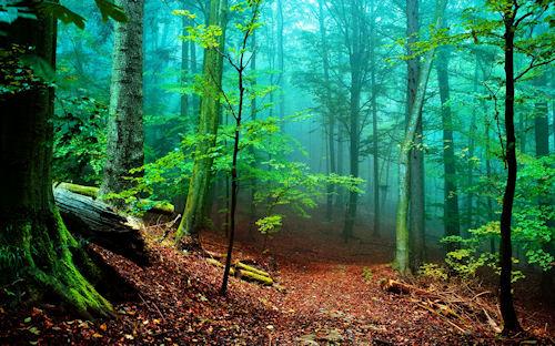 De paseo por el bosque (Lugares para Meditar) Wallpaper de 1920x1200