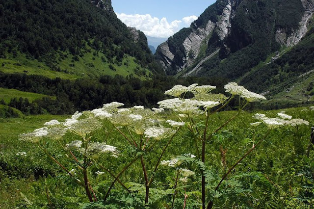 Valley of Flowers National Park, Uttaranchal