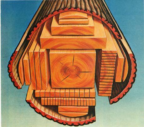 la belle bo te outils la coupe de bois. Black Bedroom Furniture Sets. Home Design Ideas