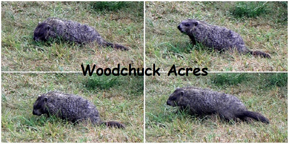 Woodchuck Acres