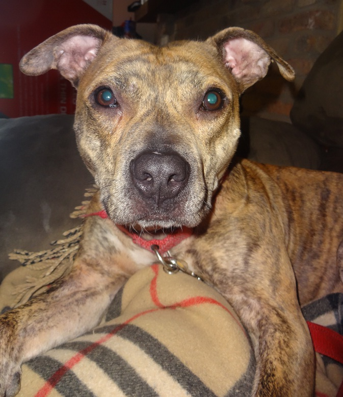 Dogs To Adopt In Duluth Mn