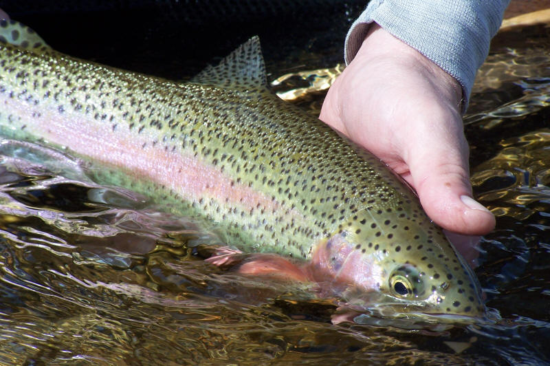 rainbow trout fishing in lakes tips