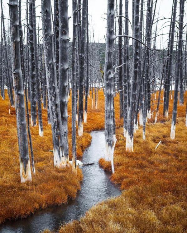 Hutan Kontras Wyoming