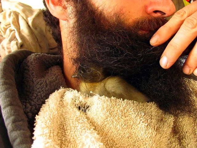 Un patito bajo la barba