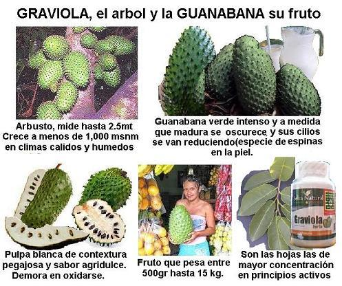 Image Gallery hoja de guanabana cancer