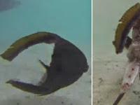 Ikan Ini Mampu Hidup Meskipun Tubuhnya Tinggal Separuh
