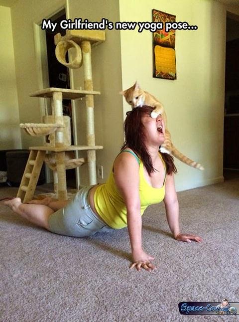 funny cat humor pics