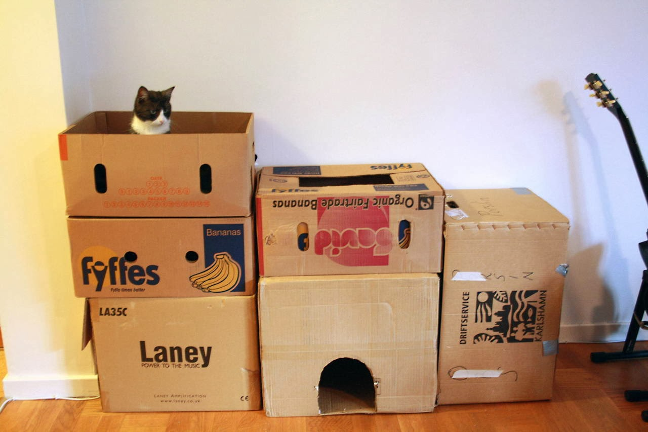 Funny cats - part 88 (40 pics + 10 gifs), cat plays in a box fortress