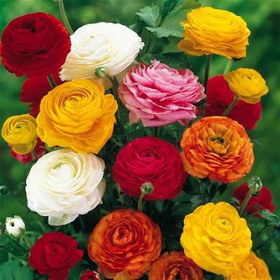 bunga mematikan