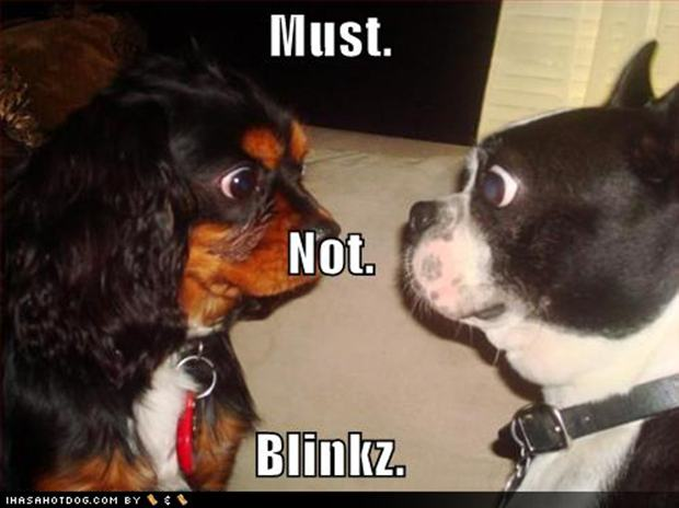 Funny Pictures| Funny Facebook Photos| Funny Jokes: Funny Cats vs Dogs ...
