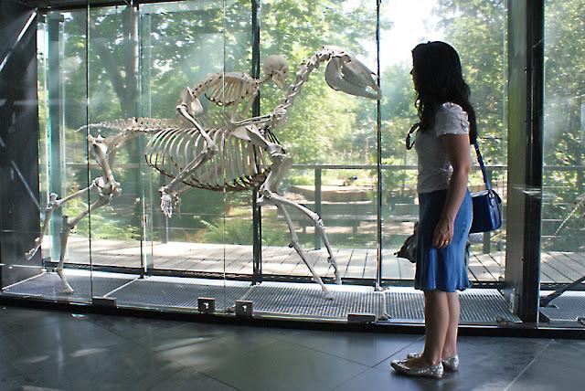 Museo de Historia Natural de Toulouse