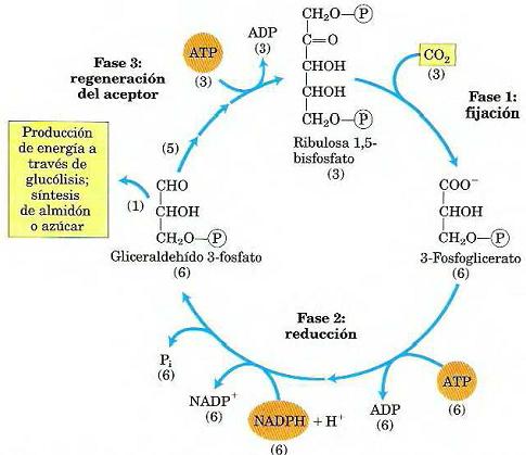 Exame metabolismo