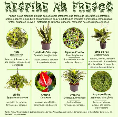 Feng shui ideias plantas purificadoras do ar for Plantas para dormitorio feng shui