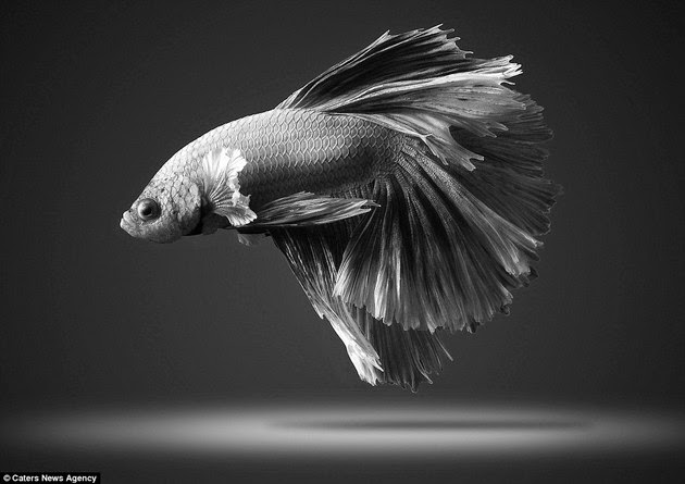 mind-blowing-creatures-4