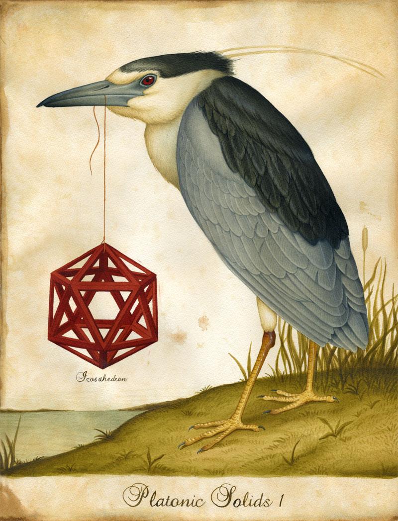 Animalarium: Lindsey Carr Platonic Solids Art
